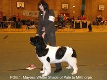 Mayoss Whiter Shade Of Pale To Millthorpe