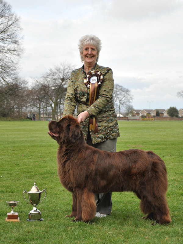BEST BROWN IN SHOW - Stelamah Just Love Her