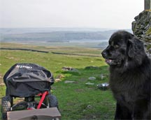 Picture of black Newfoundland dog sat beside a four wheeled cart in the Yorkshire Dales