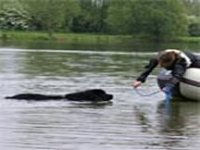 Picture of a black Newfoundland approaching a boat correctly to take a rope